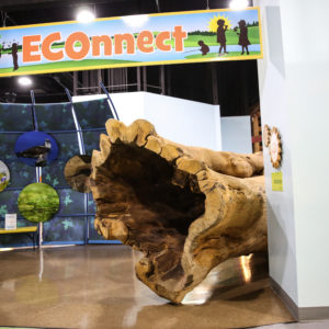 The Tree Pavilion at the Delaware Children's Museum